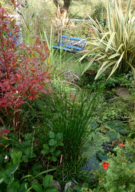 The wild-life pond.
